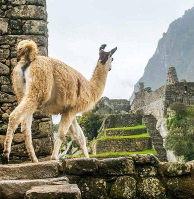 Valle Sagrado + Machu Picchu